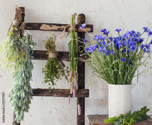 different fresh herbs on background old wall