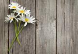 Daisy chamomile flowers