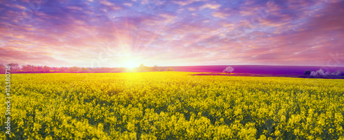 Poster Lichtroze Rapeseed field in spring