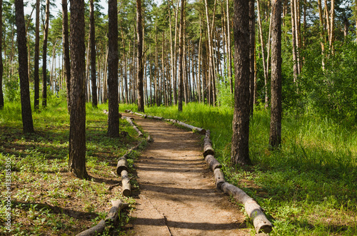 Keuken foto achterwand Bossen road into pine forest