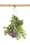 Fresh herbs Food ingredients thyme oregano marjoram - 113393552