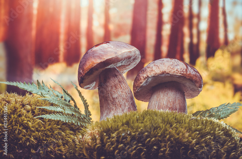 closeup of forest mushrooms
