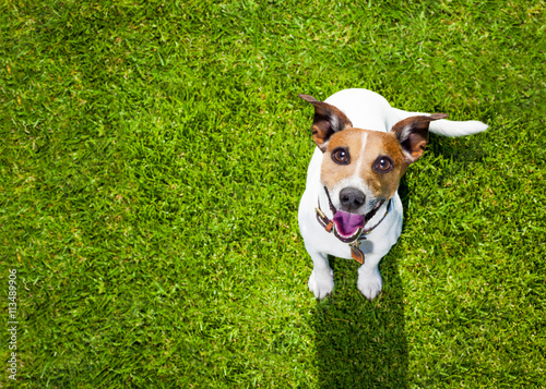 canvas print picture dog plays with owner looking up