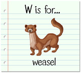 Flashcard letter W is for weasel