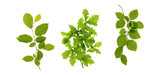 Green leaves isolated on white . - 113516518
