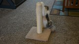 An adult domesticated female muted calico cat uses a scratching post in a living room, rubs her head on it and walks away