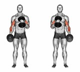 Cross body hammer curls. Exercising for bodybuilding Target muscles are marked in red. Initial and final steps. 3D illustration - 113536151