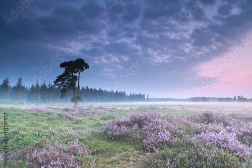 misty sunrise with flowering heather - 113597957