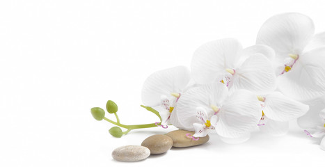 Spa white orchid with massage stones