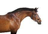 brauner Pferdekopf freigestellt