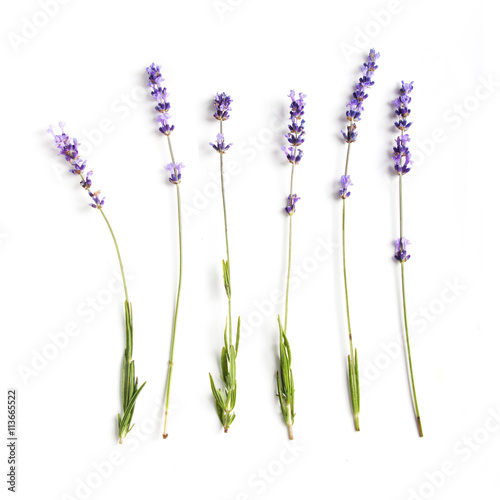 lavender flowers set