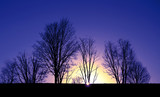 Colorful autumnal sundown with bare trees - 113692784