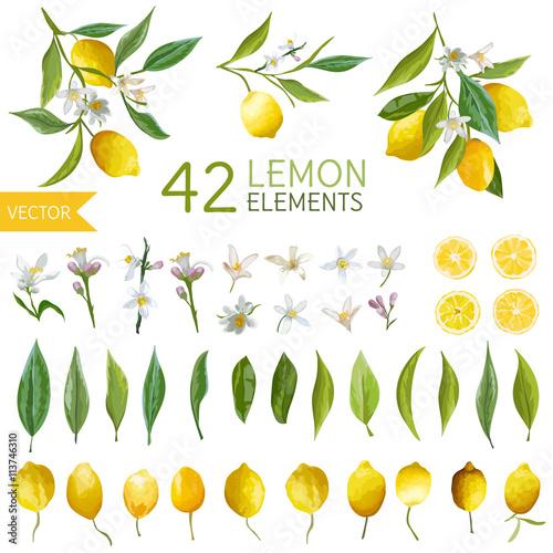 Vintage Lemons, Flowers and Leaves. Lemon Bouquetes. Watercolor