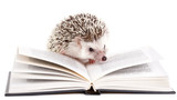 Fototapety African hedgehog and book