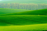 Green wavy hills in South Moravia