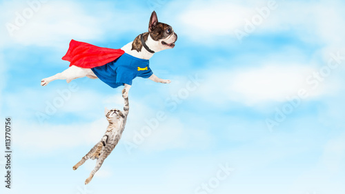 Foto op Canvas Franse bulldog Super Hero Dog Flying Over White