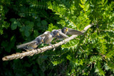 Pájaros golondrinas