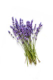 Lavender flowers on white background - 113825768