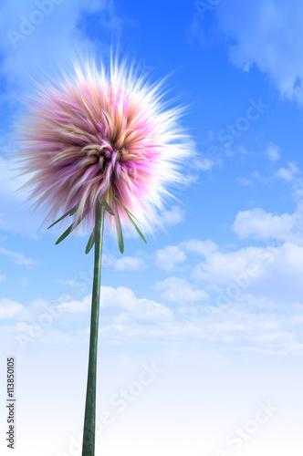 Zdjęcia na płótnie, fototapety, obrazy : Fantasy Dandelion A fluffy fairy tale version of a dandelion type flower. Seen here against a blue cloudy sky.