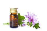 Frasco cuentagotas con aceite esencial o extracto de flor de malva aislado sobre un fondo blanco para uso como medicinas alternativas - 113875352