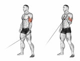 Flexion of one hand with the handle of the lower block. Exercising for bodybuilding Target muscles are marked in red. Initial and final steps. 3D illustration