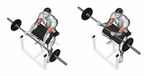 Curls on the bench. Exercising for bodybuilding Target muscles are marked in red. Initial and final steps. 3D illustration