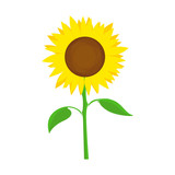 Sunflower Vector Symbol
