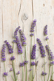 Fresh lavender flowers - 113909931