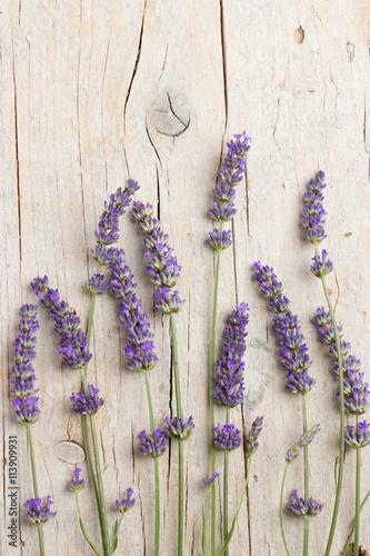 Fotobehang Lavendel Fresh lavender flowers