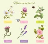 Medicinal herbs set