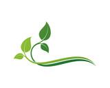 Leaf Ornament - 113937789
