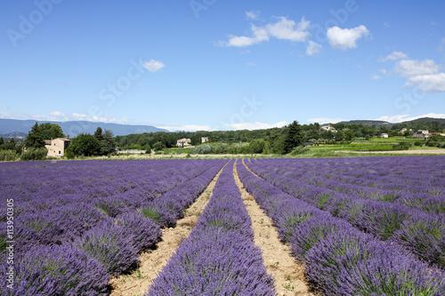 Canvas Lavendel lavandes en provence