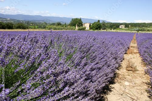 Aluminium Lavendel lavandes en provence