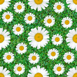 Daisy flowers seamless pattern on natural green grass mix background