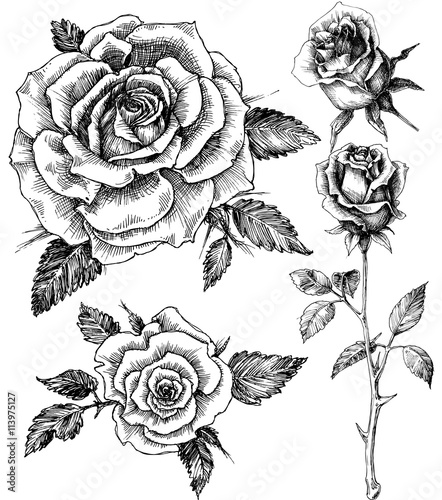 Flowers Set Hand Drawn Rose Vector Etch Style Buy Photos Ap