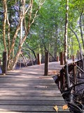 bridge to mangrove forest