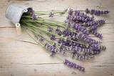 Fresh lavender flowers