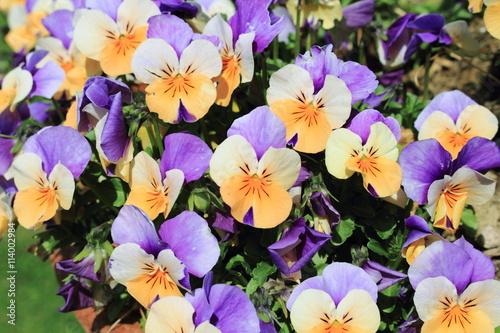 Zdjęcia na płótnie, fototapety, obrazy : primavera stagione della fioritura