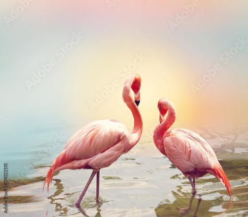 fototapeta na ścianę Two Flamingos near water