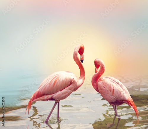 obraz lub plakat Two Flamingos near water