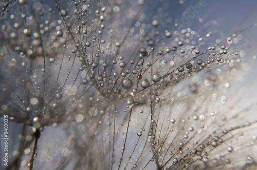 Abstract macro photo