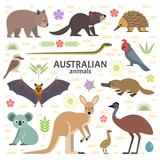 Fototapety Vector illustration of Australian animals: moose, flying fox, kangaroo, koala, Tasmanian devil, echidna, wombat, emu, cockatoo, platypus, isolated on transparent background.
