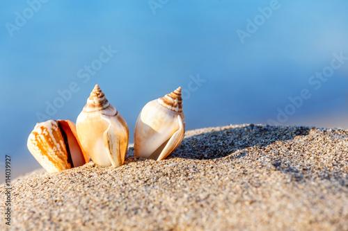 mata magnetyczna sand beach sea shell