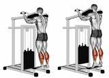 Standing Calf Raises. Exercising for bodybuilding Target muscles are marked in red. 3D illustration