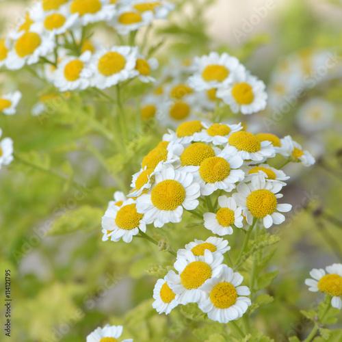 fototapeta na ścianę Blumen 603