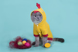 Scottish Fold cat in a chicken costume celebrates Easter