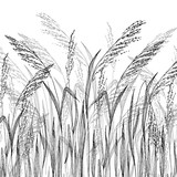 Fototapety Vector grass sketch, vector illustration with wild herbs