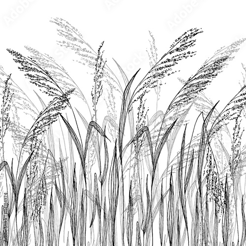 Vector grass sketch, vector illustration with wild herbs - 114184974