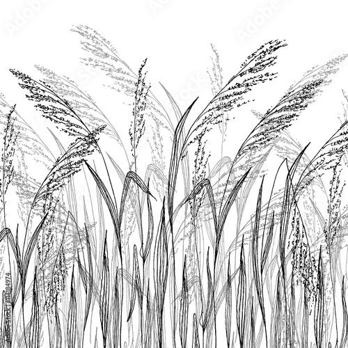 Fototapeta Vector grass sketch, vector illustration with wild herbs