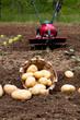 Detaily fotografie Potatoes